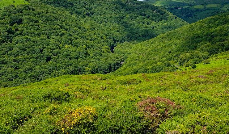 Dartmoor wooded valley of the dart