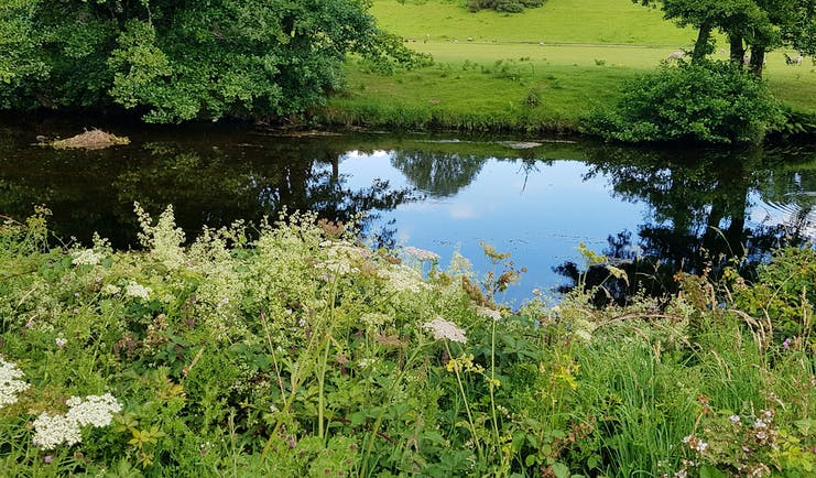 Dartmoor river side with flowers and fields