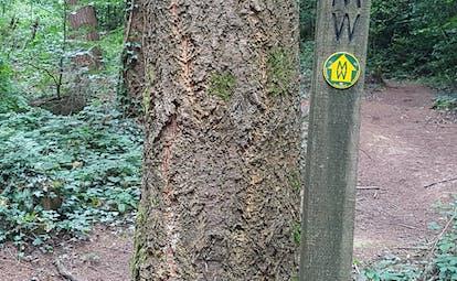 Dartmoor two moors way yellow arrow sign
