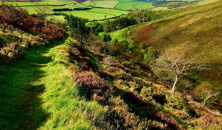 Deddy Combe Exmoor fields and green track