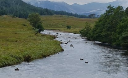 River running between grass and fir trees with mountains in distance