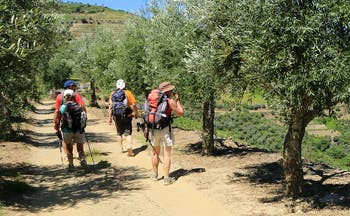 Four walkers on flat track in vineyards and olive trees