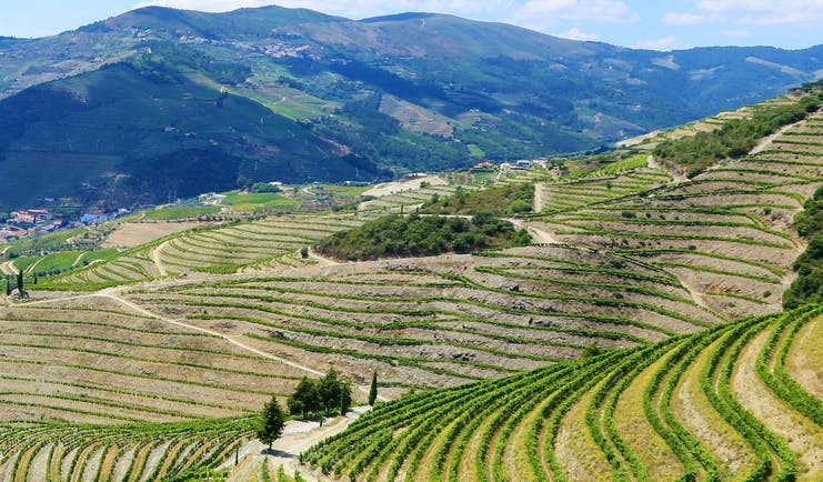 View of vineyards on steep hillside above blue river