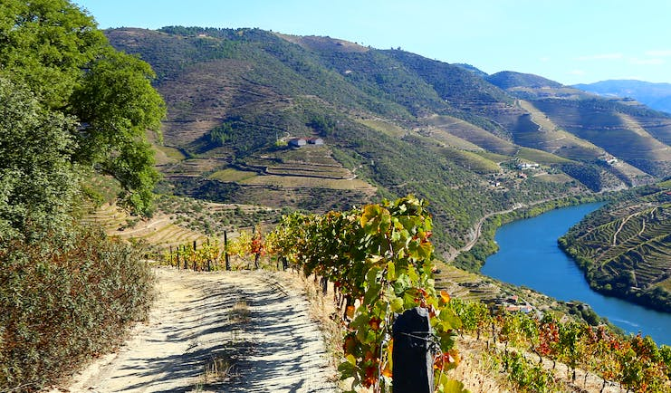 Steep sided valleys with vines with blue water of river Douro