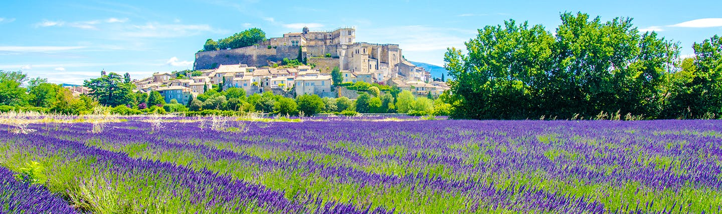 Lavender beds and town in distance