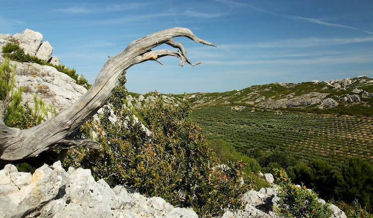 Alpilles Provence scenery tree and valley