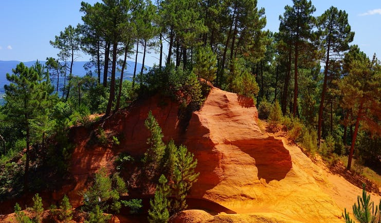 Red soil with trees