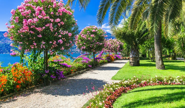 Bright colours of shrubs and plants with palm tree in lakeside gardens on Lake Maggiore