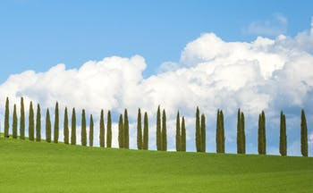 Green rolling hills and cypress trees of Tuscany