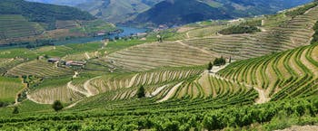 Douro region vineyards